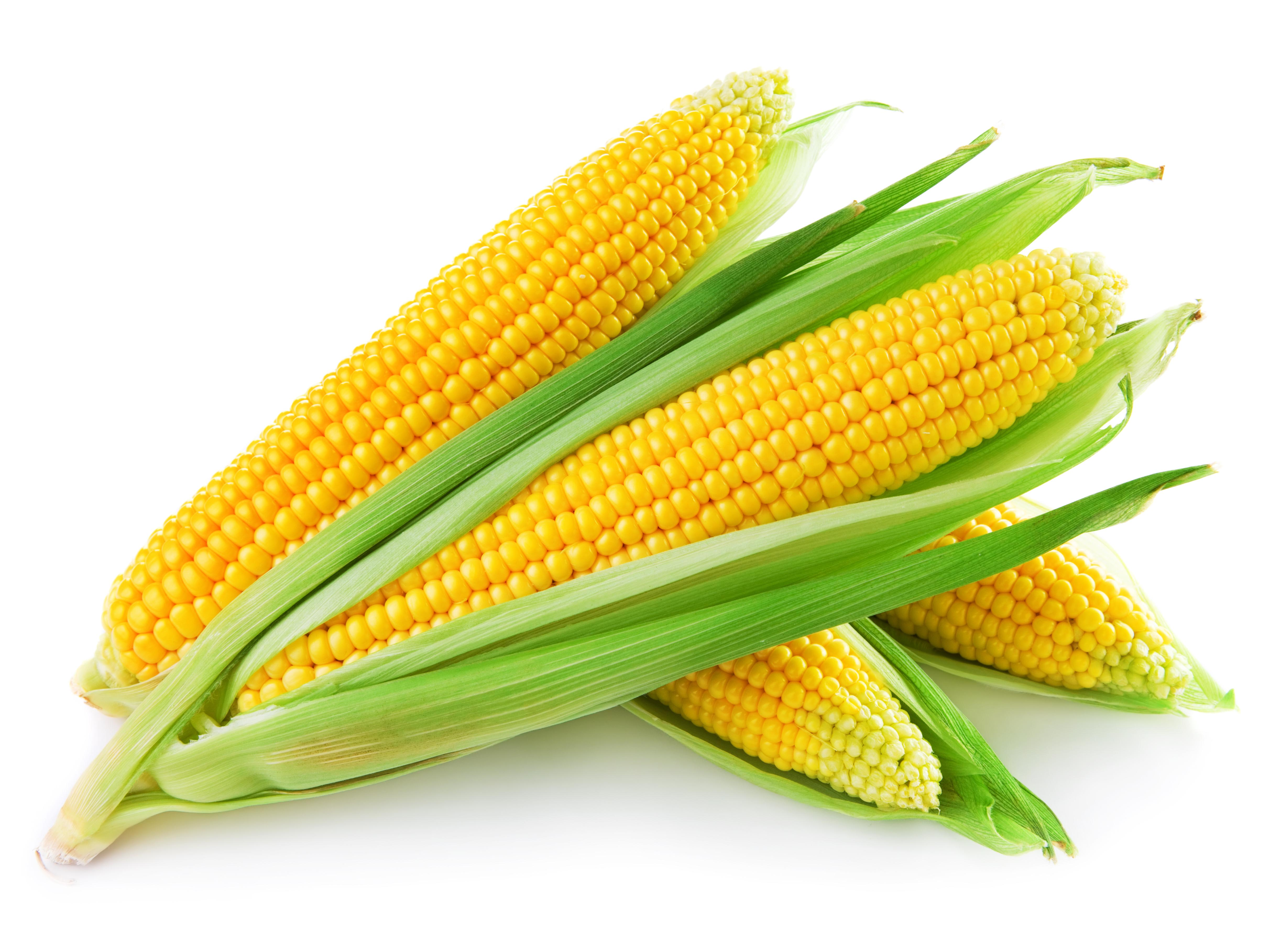 corn_picture_02_hd_pictures