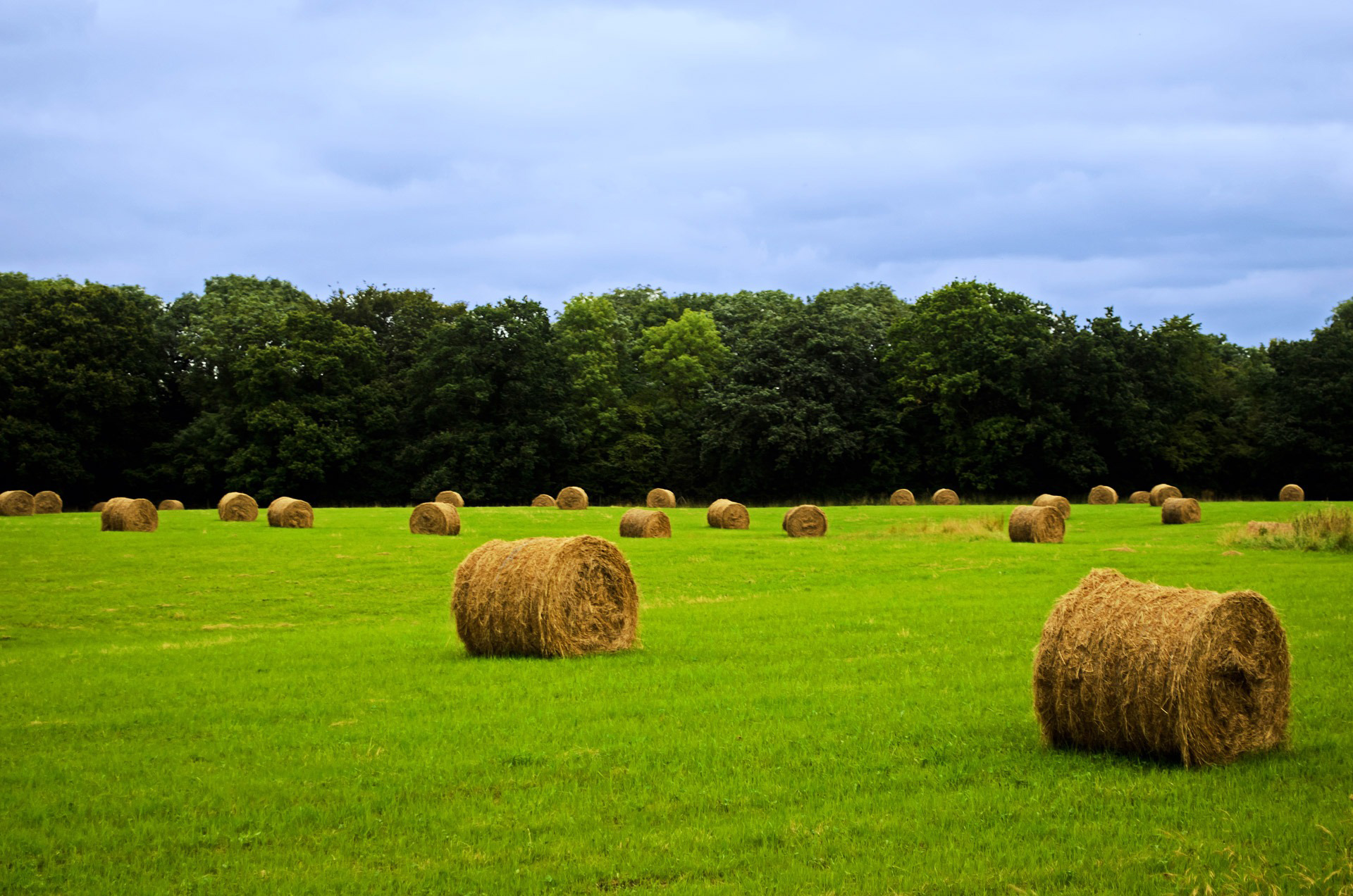 harvested_field_with_straw_207868